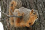 Suggestions On Protecting A Pet Squirrel