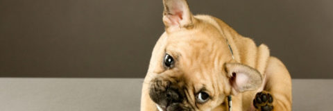 Best Ways to Keep Ticks From Tormenting Your Pooch