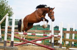 Quality is Key, When Selecting Jumps for Your Horse
