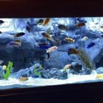 How To Set Up A Tank For Cichlids & Vert