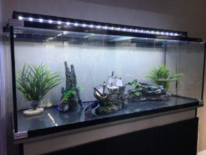 Aquariums, the new interior decor?