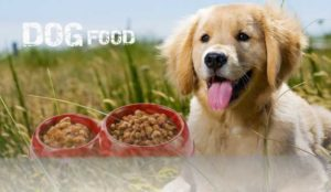 When should You Start Giving Dog Food to Puppy?