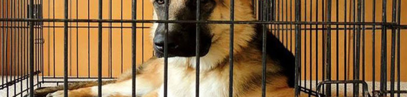 Reasons For Using Dog Crates Effectively