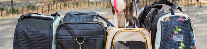 Almost everything You will need For Shipping Pets Internationally