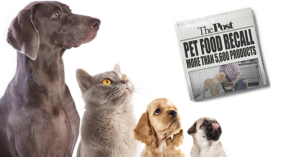 Commercial Dry Dog Food - The Shocking Truth About Meat and Fat