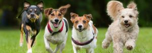 Hypoallergenic Dog Food to Keep Your Dog Healthy