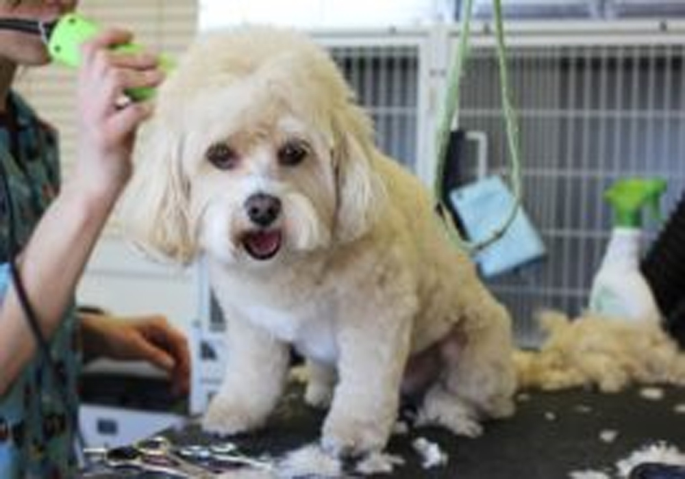Essential Grooming Tips For Your Dogs