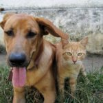 Find the Best Natural Pain Control for Pets