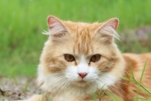 Your Cat's Personality