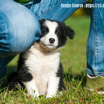 6 Questions To Consider When Getting That First Dog And Its Pet Accessories Online