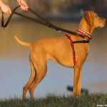 Selecting the Right Dog Harness for Your Pooch