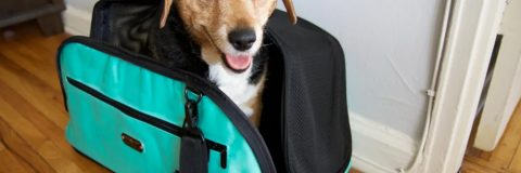 Interesting Facts About Toy Pet Carriers