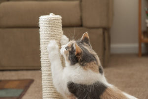A Contemporary and Easy Solution to Your Cat's Scratching Habits