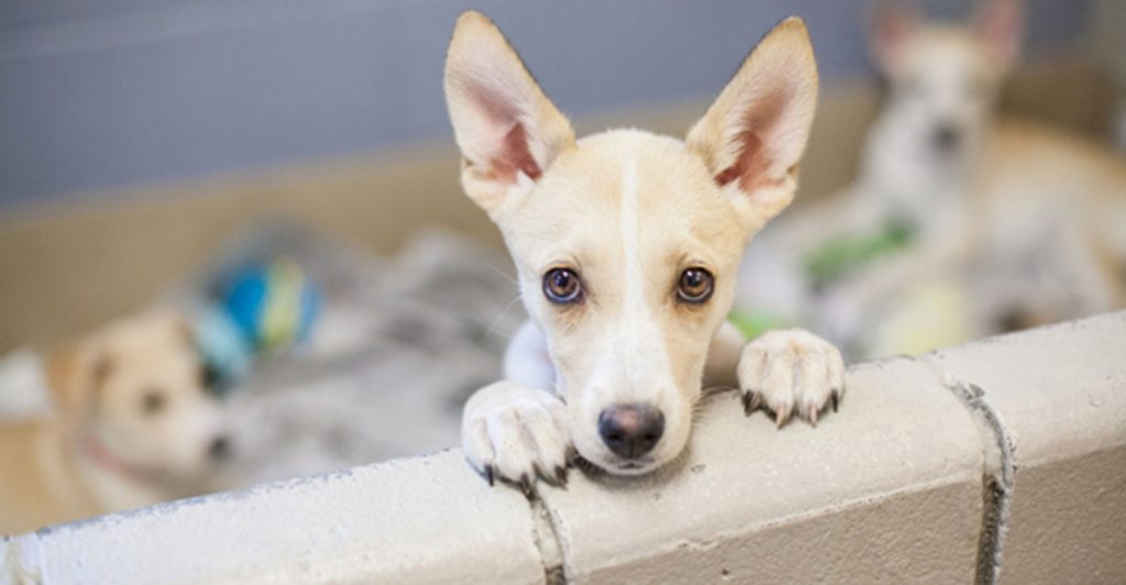 3 Tips for Puppy Adoption