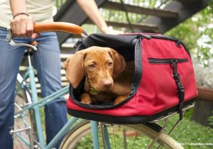 Pet Backpack Carrier When You Use A Lesser Dog It Is Sometimes Easier To Carry Them