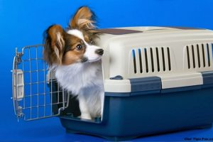 Tips on Choosing a Pet Carrier