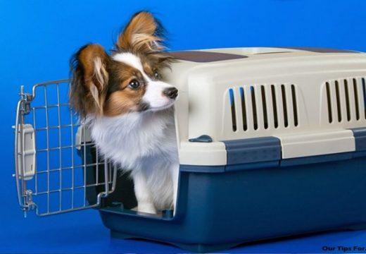 Tips on Choosing a Pet Carrier