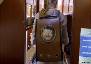 Some Positives and Negatives of Utilizing a Backpack Pet Carrier