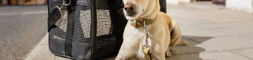 Training Your Pet to Love His Pet Carrier