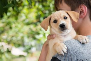 How to Choose a Pet for Your Home