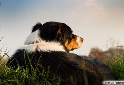 All About Dogs: Dog Training