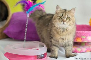 Cat Toys – Improve Physical and Emotional Health of Your Cat