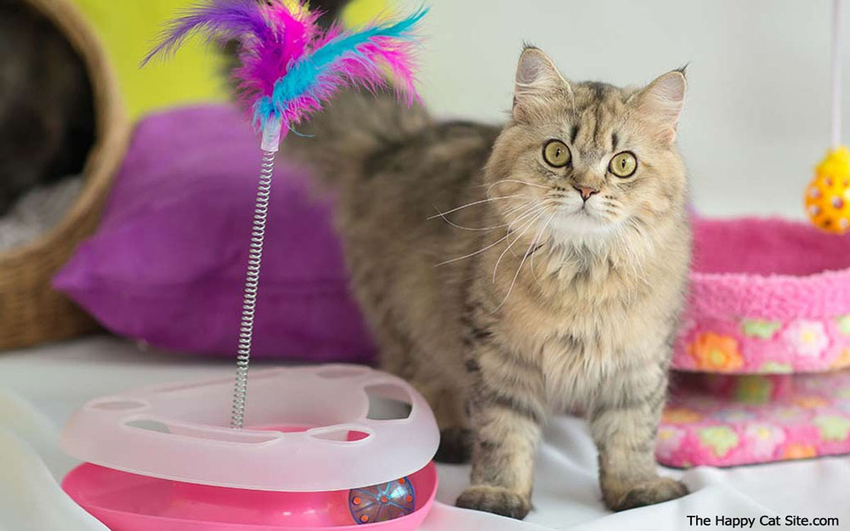Cat Toys - Improve Physical and Emotional Health of Your Cat