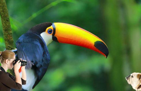 Exotic Pets Make For Superb Photographs