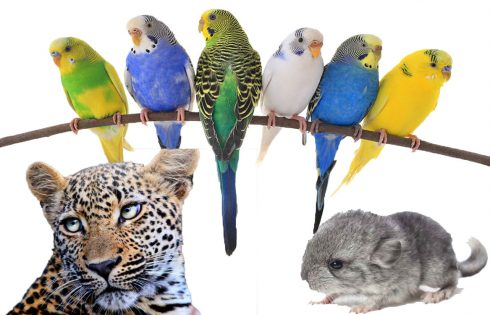 Five Exotic Pet Varieties to keep You Amused