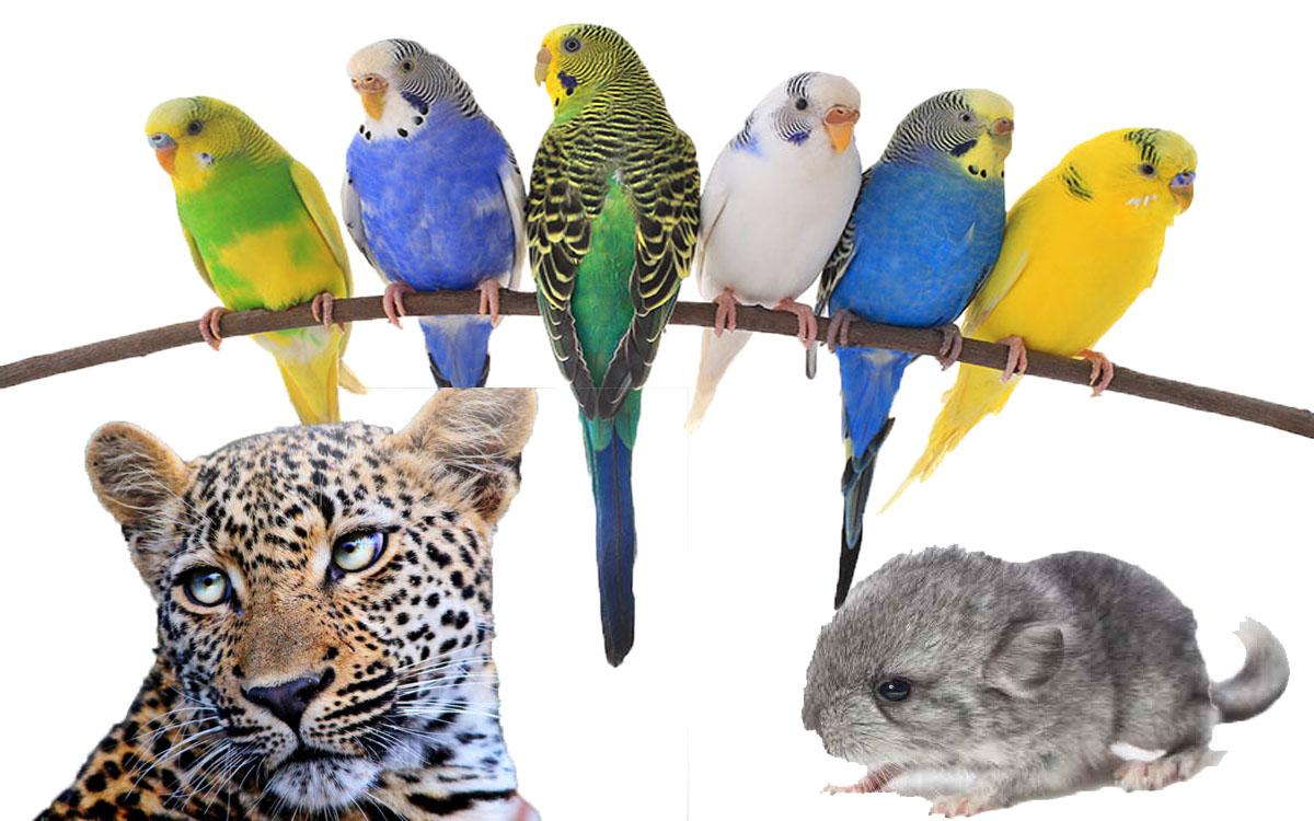 Five Exotic Pet Varieties to keep You Amused