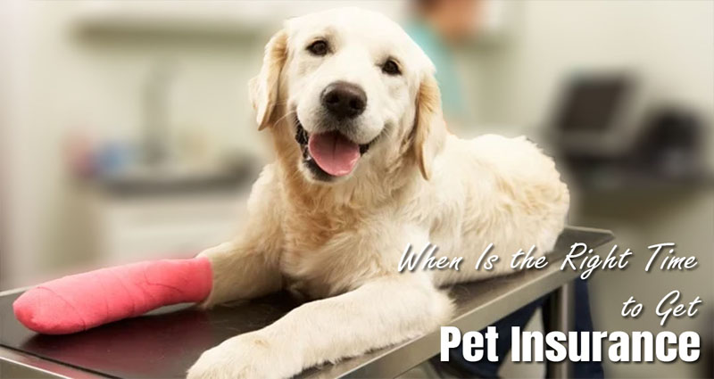 When Is the Right Time to Get Pet Insurance?