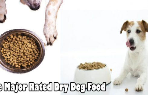 The Major Rated Dry Dog Food: Upon Closer Inspection
