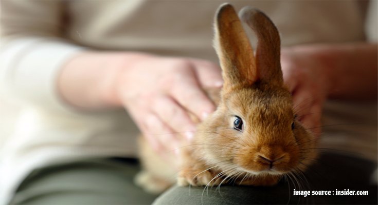 What to Be Aware of When Adopting a Rabbit?