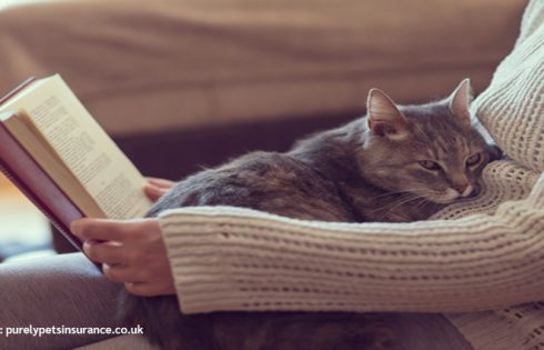 Do Cats Actually Have Feelings For Their Owners?