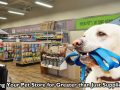 Applying Your Pet Store for Greater than Just Supplies